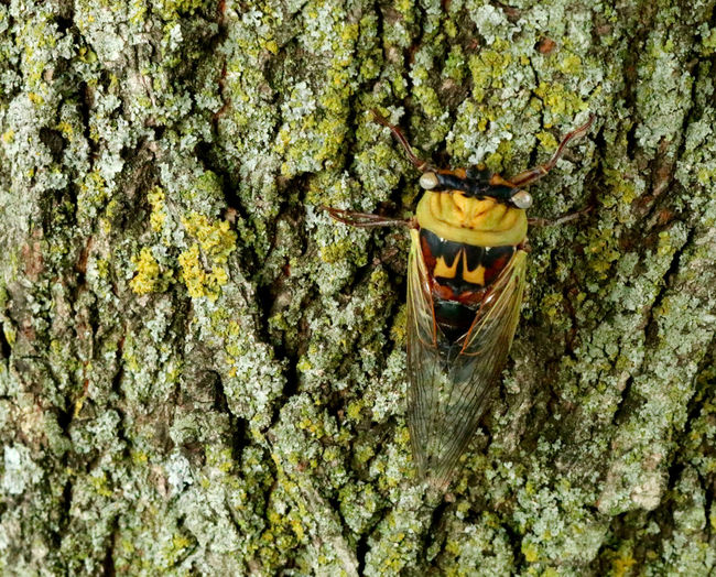 Close-up of dragon hanging on tree trunk in cave