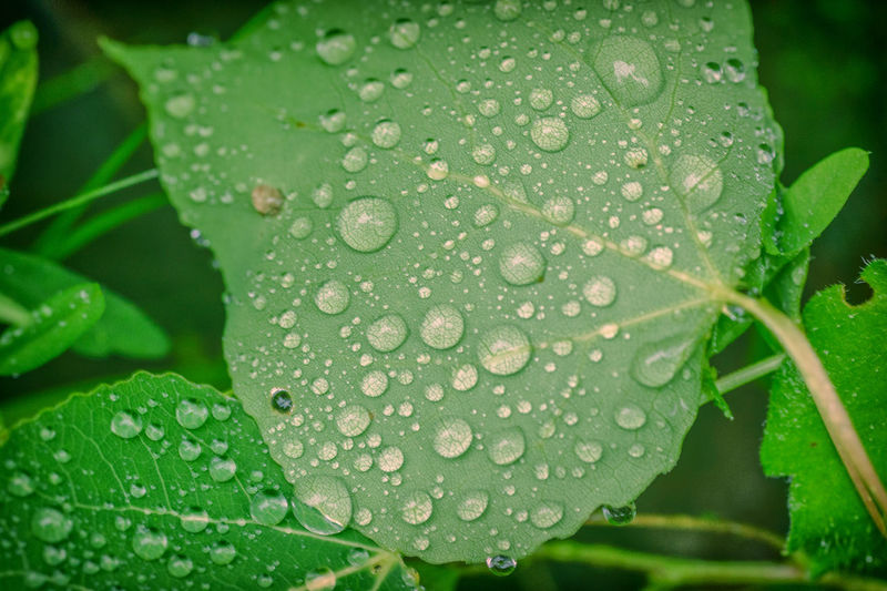 Dew Covered