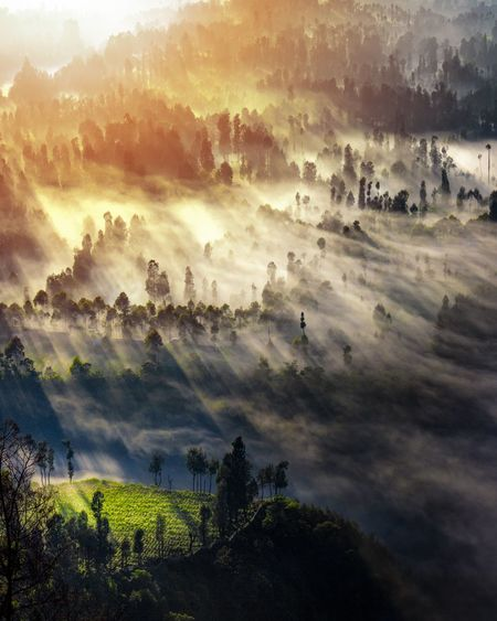 Beautiful ROL in Cemoro Lawang Sky Beauty In Nature Tranquility Tranquil Scene Scenics - Nature Tree Landscape Nature Cloud - Sky Land Mountain Day Field No People Outdoors Non-urban Scene