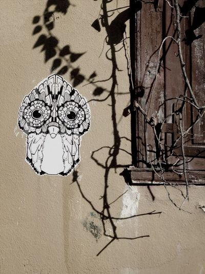 Owl Wallflower