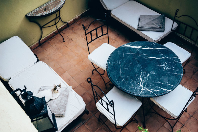 A Cat A Cat's Life At A Riad High Angle View Luxurylifestyle  Moroccan Cat No People Relaxing Cat White Chair