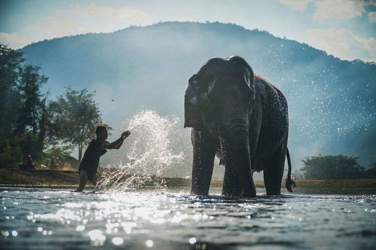 Young man washing elephant in lake