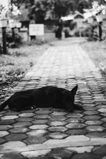 One Animal Animal Themes Domestic Animals Cat Pets Side View Focus On Foreground Domestic Cat Mammal Black Feline Zoology Relaxation Day No People Footpath Animal Black And White EyeemPhilippines Monochrome Photography