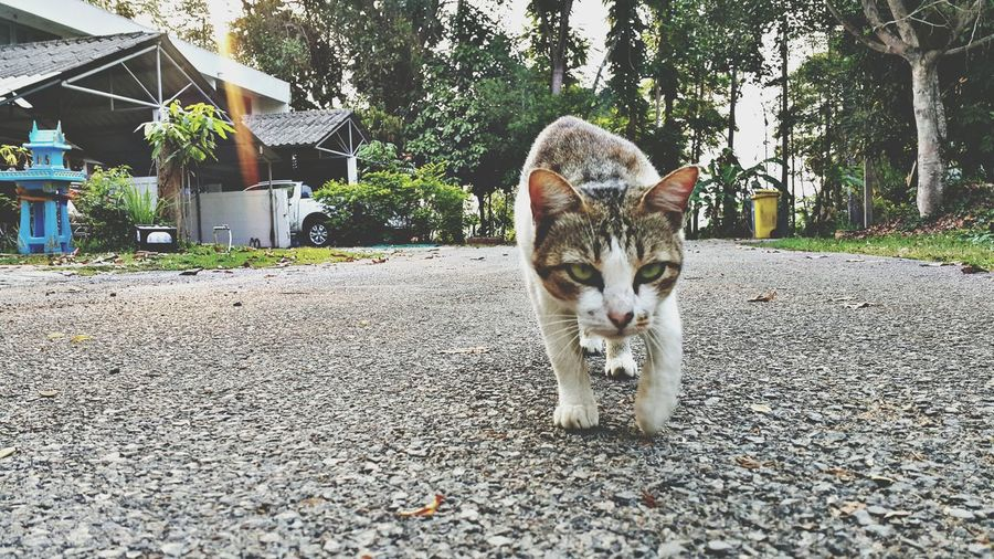 Cat Cat Lovers Cat Photography