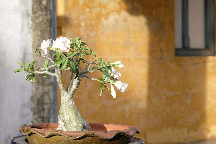 Close-up of small plant in vase against wall of building