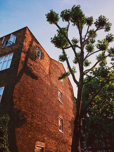 Dusk in Chelsea, London. Architecture Building Exterior Built Structure Day Dusk Dusk In The City House London Low Angle View Nature No People Outdoors Shadow Sky Tiled Roof  Tree Window