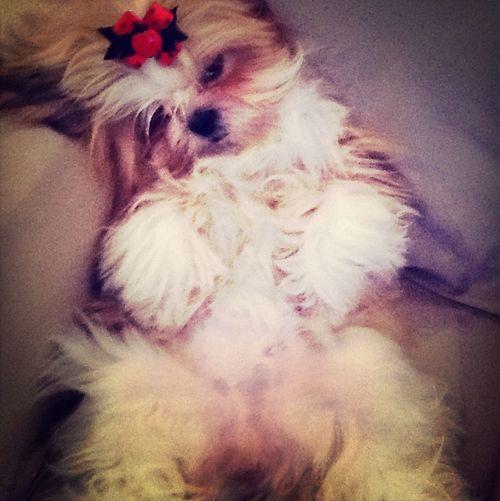 Cachorrinha linda ?