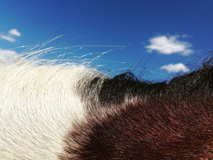Horse Horse Photography  Horse Life Equine Equine Photography Sky Outdoors Blue Close-up White Brown Blue Sky EyeEmNewHere