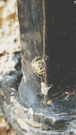 Spider Aranha Arachnid Aracnideos Aracni