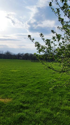 Green Color Tree Grass Sky Nature No People Cloud - Sky Sport Soccer Soccer Field Beauty In Nature Day Outdoors Freshness Bird First Eyeem Photo Awesome_shots Chicago Chicago Photographer Awesome_captures Beauty In Nature Branch Amazing Life Freshness