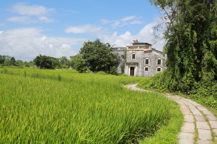 Kaiping village in guangdong, china Curve Road Plant Architecture Built Structure Building Exterior Environment Landscape Land Building Beauty In Nature Sky Nature No People Growth Cloud - Sky Field History Outdoors Grass Meadow Path Pathway House Village Village Life Scenery Men Field Farmland Farm Green Color Summer