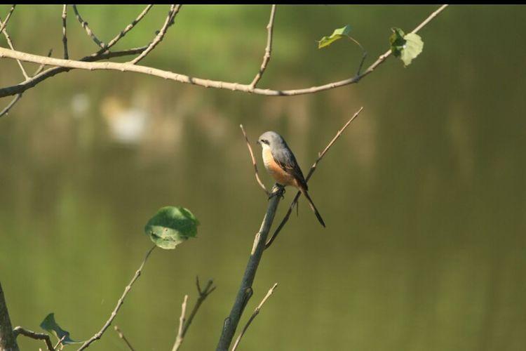 Bird Bird Photography Birdwatching Birdsofindia Birdsofindiansubcontinent Wild Wildlife Wildlife & Nature Wildlife Birds Wilderness