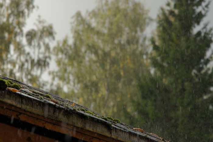 Drops Rain Architecture Built Structure Countryside Day Foreground Focus Low Angle View Moss Nature No People Outdoors Rayning Day Roof Sky Spruce Tree Water Wet