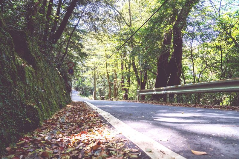 Tree Autumn Nature Road Day Forest The Way Forward Growth Outdoors Leaf Tranquility Tranquil Scene No People Scenics Beauty In Nature Branch Japan