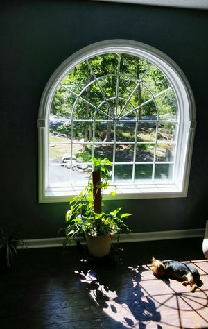 My Favorite Place Window Indoors  Potted Plant Arch Plant Day Growth Transparent Dog Photography Looking Through Window Sitting Dogoftheday Dog Life Dog Love Dogs Of EyeEm Tranquil Scene Dogsofinstagram Doggie Love Dog Days Dogmodel Dogs Life Dogstagram Dogs Favorite Place Pet Portraits