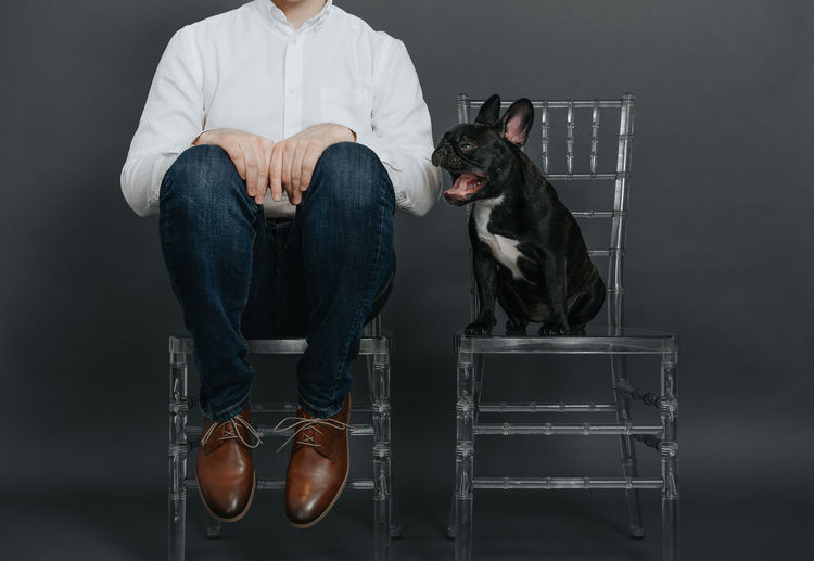 Pets Midsection Transparent Chair Chairs One Person One Man Only Men Animal One Animal Pet Animal Themes French Bulldog Frenchie Frenchbulldog Yawning Low Section Sitting Studio Shot Fashion Shoe Gray Background