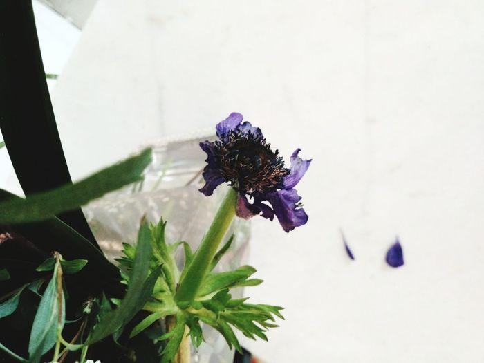 mementomori Flower Head Flower Butterfly - Insect Insect Leaf Purple Close-up Animal Themes Plant Iris - Plant Lantana Lantana Camara Pollen Bee Hibiscus Osteospermum Eastern Purple Coneflower Botany Pollination In Bloom Blooming Symbiotic Relationship Petal Plant Life Stamen