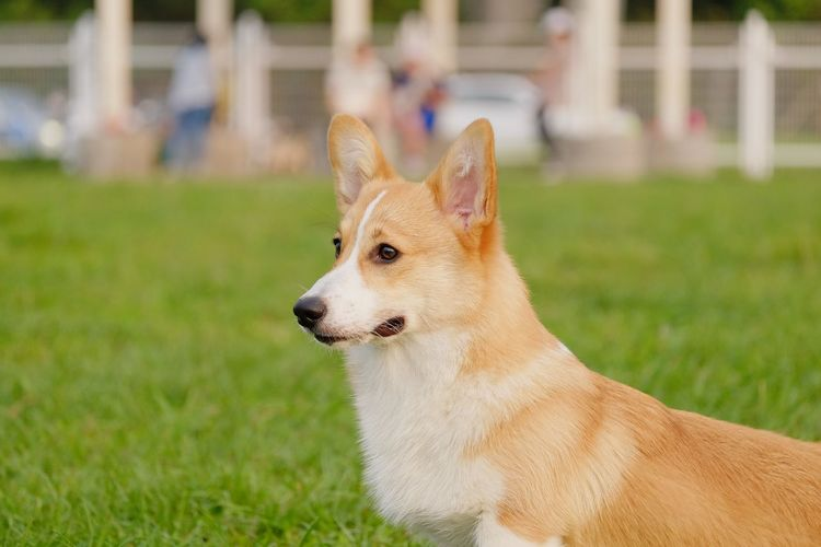 Doggy in dog park happy and joyful