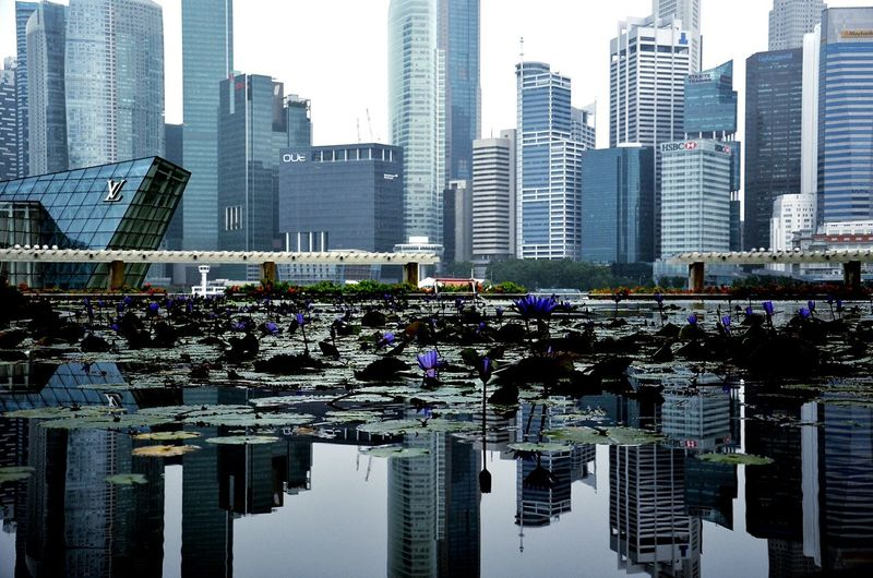 Mirrored Mirror Reflection Lilies In Bloom Lilies Skyscraper Architecture Building Exterior City Modern Urban Skyline Cityscape The Graphic City