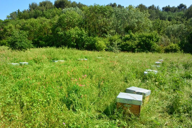 Grass Green Color Beehive Honeycomb Bee Colony APIculture Honey Pollination