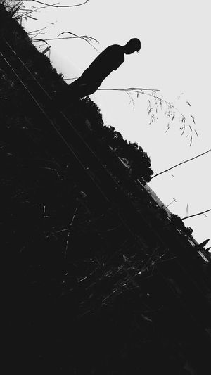 🖤BLACK IS MY HAPPY COLOUR 🖤 Blackandwhite Black Sky Low Angle View Animal Nature Animal Themes Silhouette Animal Wildlife Vertebrate Bird Animals In The Wild Day No People Flying Large Group Of Animals Tree Clear Sky Outdoors Flock Of Birds Plant