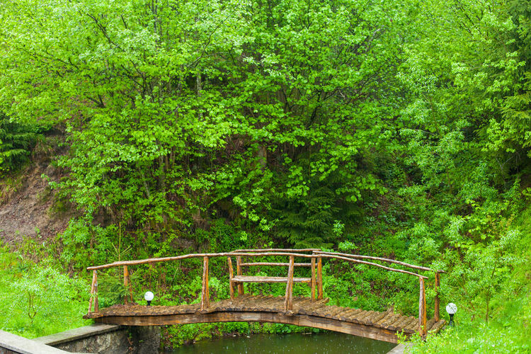 Beauty In Nature Bridge Day Environment Forest Grass Grass Green Green Color Growth Hill Lake Nature No People Outdoors Summer Tree Water Wild Nature Wildlife Wood - Material