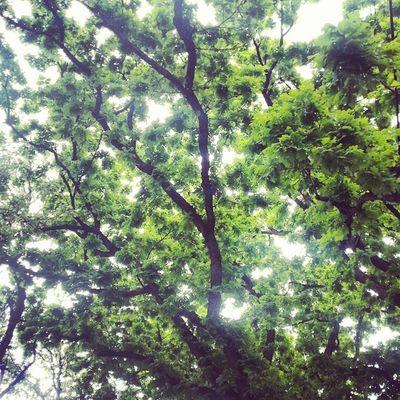 Sixthward HistoricDristict Houston HoustonTX Nature Tree Texas Spring