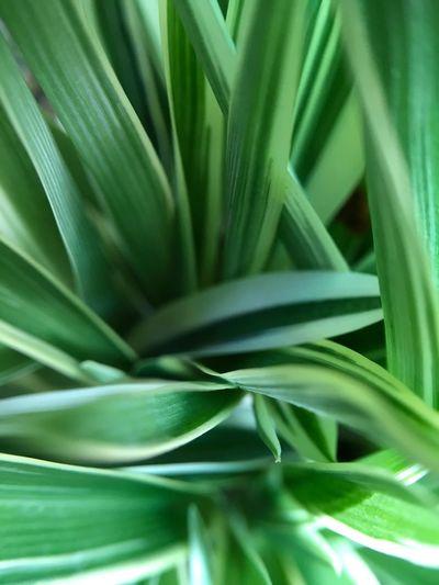 leaves green is