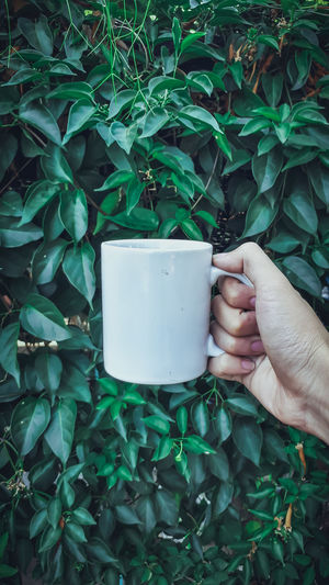 my cup Human Hand Leaf Close-up Plant Green Color Creeper Plant Footwear Ivy Canvas Shoe Overgrown Low Section Creeper Stone Tile Pair Personal Perspective Wooden Floor Shoe Vine Human Leg Human Foot Snowdrop