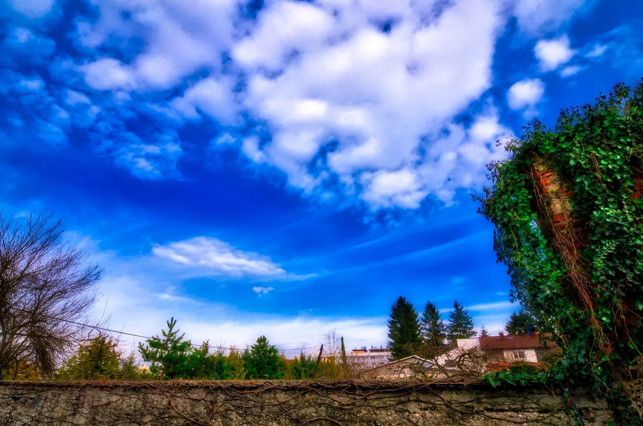 cloud - sky, sky, tree, plant, beauty in nature, nature, no people, tranquility, tranquil scene, scenics - nature, blue, growth, day, land, landscape, outdoors, low angle view, non-urban scene, environment, architecture, ominous