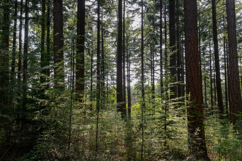 Nieuw Soerel walk in Nunspeet, The Netherlands Netherlands Nunspeet The Netherlands Tree Trees Veluwe Vierhouten WoodLand Beauty In Nature Forest Holland Nieuw Soerel Scenics Soerel Vierhouter Heide