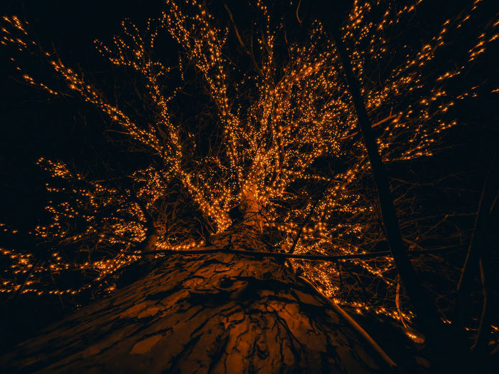 Low angle view of illuminated trees during winter at night