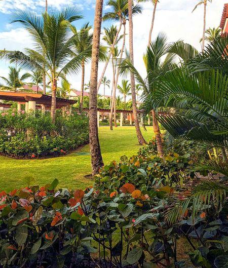 Tropical Beauty Tropical Plants Tropical Garden Tropical Flowers Tropics Palm Trees Dominican Republic Caribbean