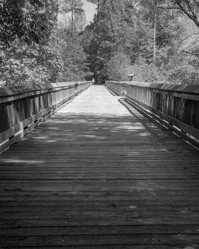 Observation bridge The Way Forward Direction Diminishing Perspective Built Structure Tree Architecture Plant Nature Railing Connection vanishing point No People Footbridge Outdoors Bridge Wood - Material Day Bridge - Man Made Structure Transportation Footpath