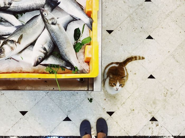 Cat in a fish market Cat And Fish Fish Market Fish No People High Angle View Day Animal Directly Above Vertebrate Art And Craft Animal Themes Creativity Mammal Plant Nature Outdoors Cat Domestic Animals Feline Pattern Pets
