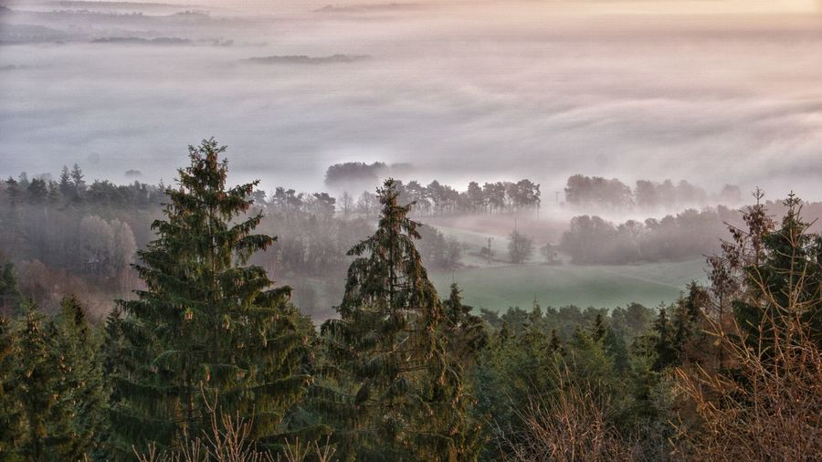 Fog in the Werratal in the morning Tree Fog Agriculture Rural Scene Sky Landscape Pine Tree Needle - Plant Part Evergreen Tree Pine Wood Foggy Mist Pine Woodland Dawn