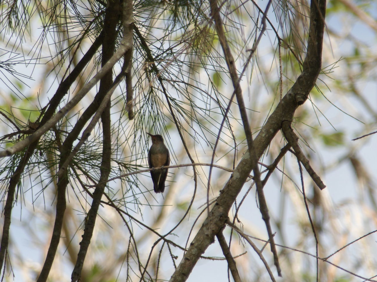 animal themes, one animal, tree, animals in the wild, branch, nature, no people, bird, animal wildlife, day, low angle view, outdoors, beauty in nature, mammal, perching, bird of prey