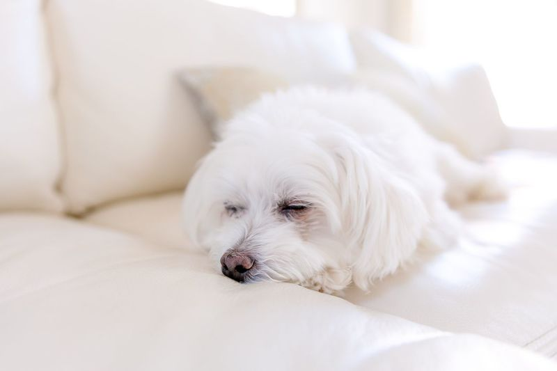 Close-up of dog resting on bed