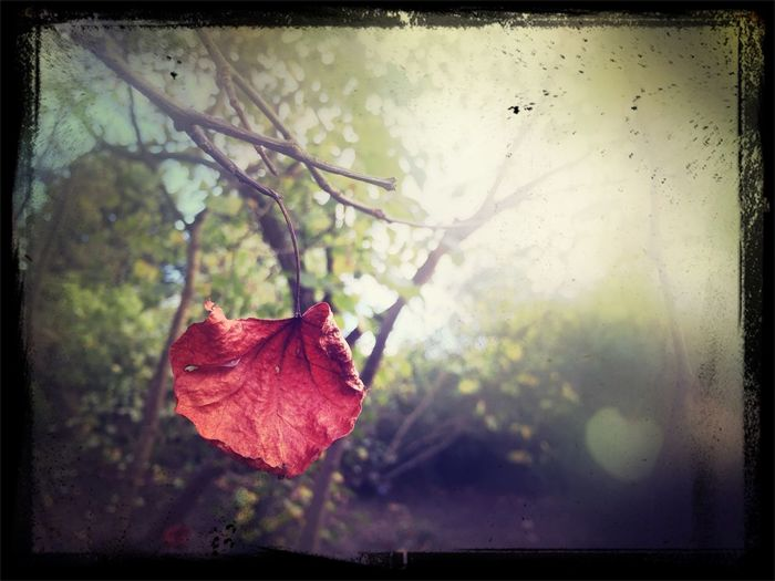 Leaf Soft Tones Autumn Taking Photos