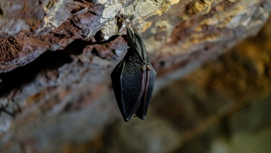 Close-up of bat on rock