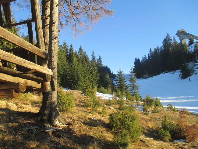 Vlasic mountain ,Bosnia and Herzegovina Vlasic winter Snow Sun Trees And Sky Beautiful Nature EyeEm Nature Lover Beautiful Day Naturelovers