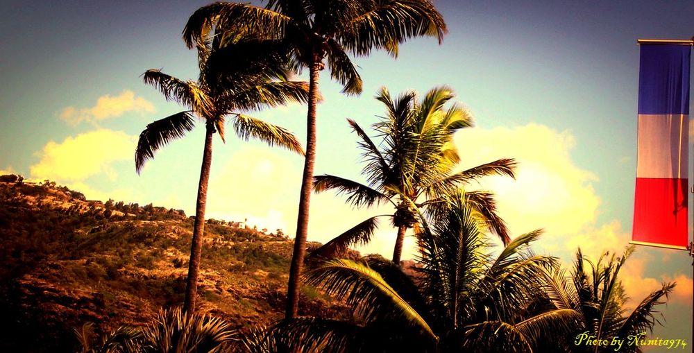 Coconut Palm Tree Eyemphotography Frenchflag Low Angle View Palm Tree Patriotism Reunion Island Scenics Sky