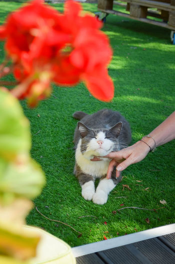 Woman hand holding cat with green plant