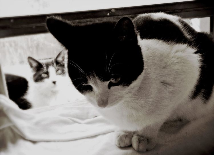 Cat Blackandwhite EyeEm Best Shots Eye4photography