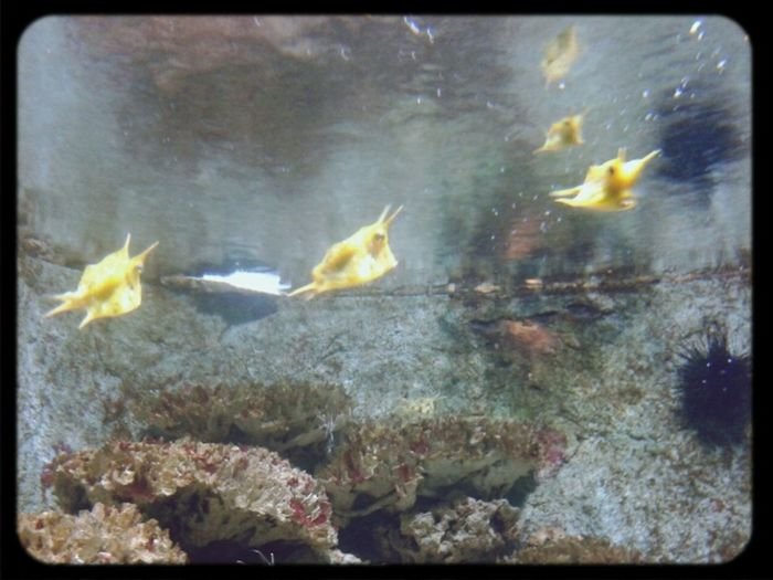 Taking Photos Zoo Fish Artis