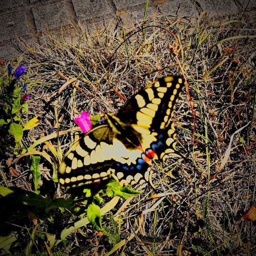 Buterfly Buterfly🌸 Buterflyflowers BUTERRFLY Galicia Galiciamaxica Ruralspain Nature Galiciameiga Buterfly 🌺🌺🌺 Buterfly Effects Buterfly Yellow Buterfly Of EyeEm Buterfly On The Garden.