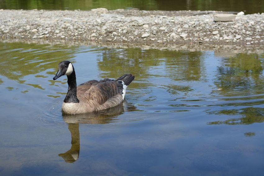 Animal Themes Animal Wildlife Animals In The Wild Bird No People One Animal Outdoors Water