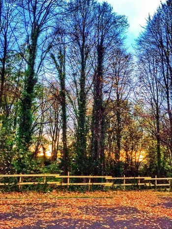 Streamzoofamily EyeEm Best Shots - HDR Autumn Sunset✨trees✨