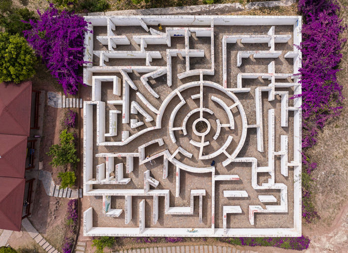 High angle view of purple flowering plants by building