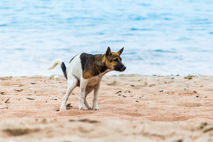Animal Animal Themes Beach Canine Day Dog Domestic Domestic Animals Excrete Land Mammal Motion Nature No People One Animal Pets Sand Sea Vertebrate Water